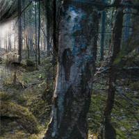 Soul Valpio: Metsän keskellä