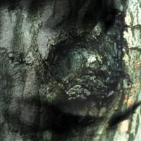 Tiersen, Yann: La Valse des Monstres / The Waltz of the Monsters