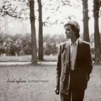 Sylvian, David: Brilliant Trees