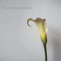 Brother Brothers: Calla lily