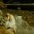 Alcest : Souvenirs d'un autre monde - CD